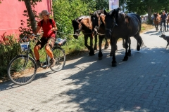 Bike-drawn horses, Hiddensee, Germany