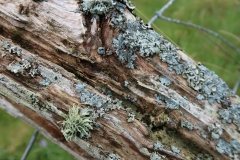 Mossy post, Ulva, Scotland