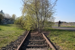 Tree on the tracks